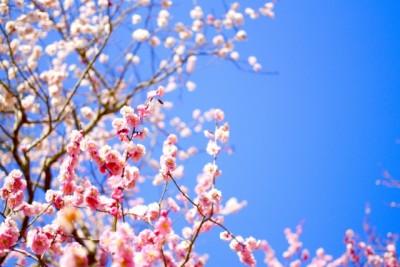 この春はピンクジェルネイルデザインがキテる。